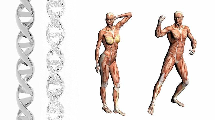 dna-activation-science-dna-human